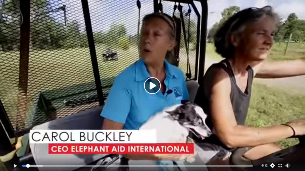 Video: Carol Buckley, CEO Elephant Aid International