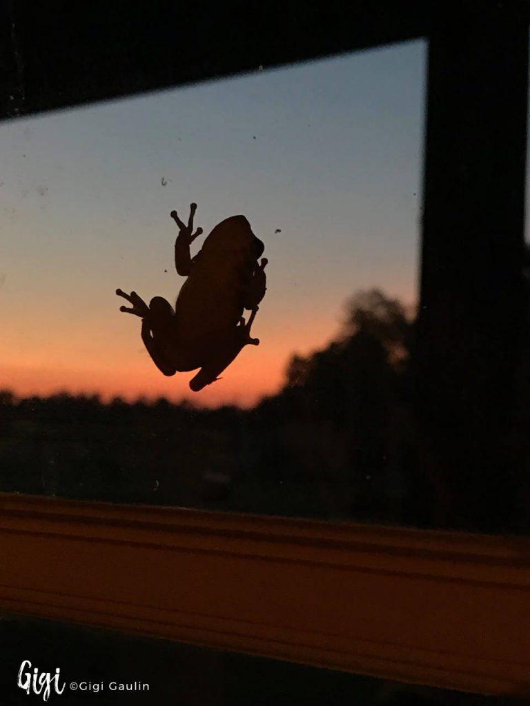Frog on Window